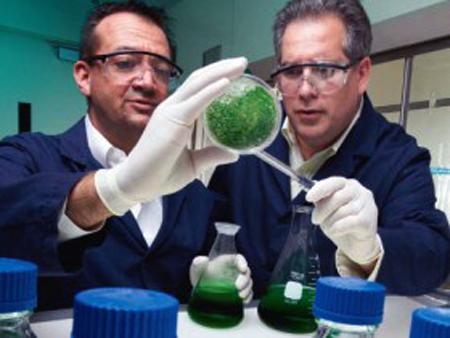 Биотопливо из водорослей, 2009 г.